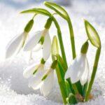 Traditie si gastronomie romaneasca / Februarie, o lună misterioasă
