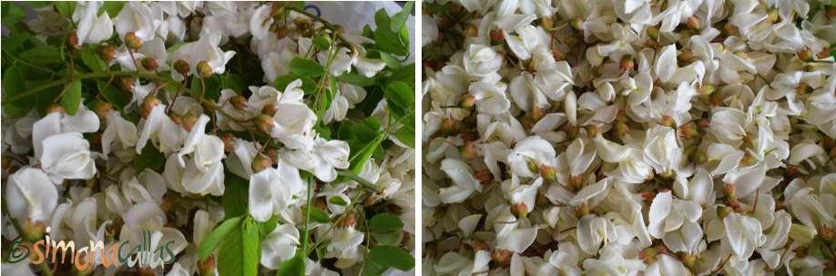 Dulceata din flori de salcam
